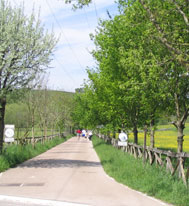 Nature Green way of Arditurri